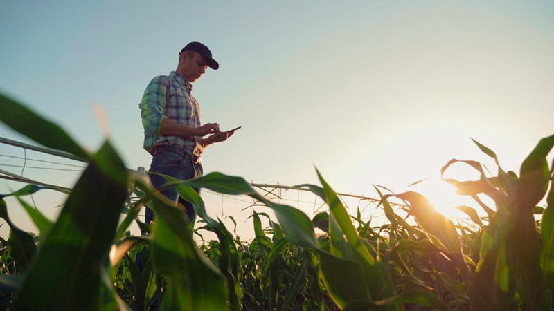 Trabalhador do campo, zona rural, área remota utilizando celular para assinar documentos digitais
